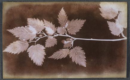 William henry fox talbot photograms